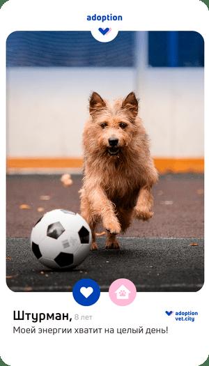 Фото №2 - Любовь в один клик: что такое pet-дейтинг, и как он поможет найти идеального питомца