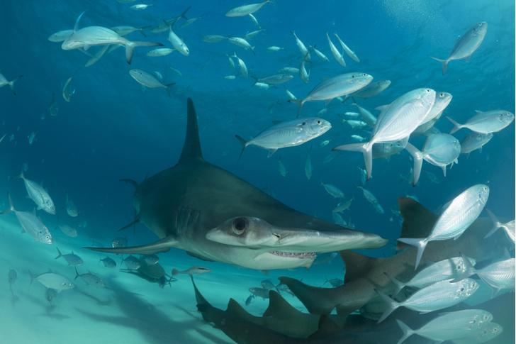 Фото №4 - Умные до ужаса: акулы — профессора убийства