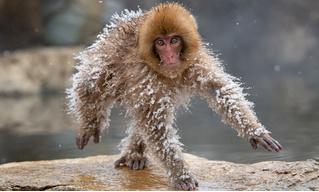 Самые смешные фото диких животных: финалисты конкурса-2019