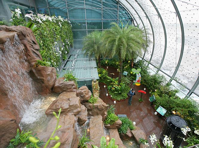 Фото №3 - Не выходя из аэропорта: 5 ботанических садов в Чанги (Сингапур)