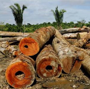 Фото №1 - Презервативы спасут леса Амазонки