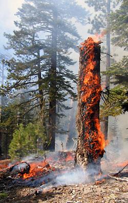 Фото №4 - Экология за дымовой завесой