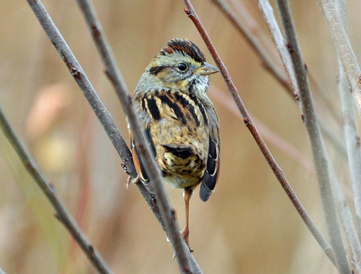 Фото №1 - Птицы оказались суперконсерваторами в музыкальных предпочтениях