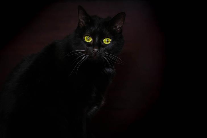 Фото №1 - Почему у кошек светятся глаза?