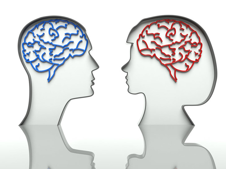 Фото №1 - Гендерные различия в работе мозга