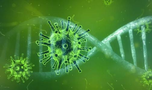 Фото №1 - Убивает вирус за сутки: ученые успешно испытали первое лекарство от COVID-19