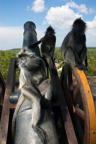 Фото №1 - Примат примату— волк. Почему люди постоянно воюют