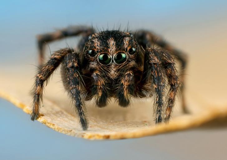 Фото №1 - Российская ученая назвала новый род пауков в честь мамы