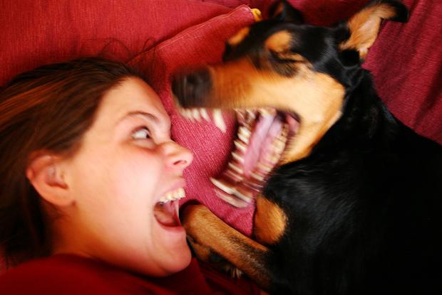 Фото №1 - Как защититься от укуса собаки, насекомого, змеи и человека