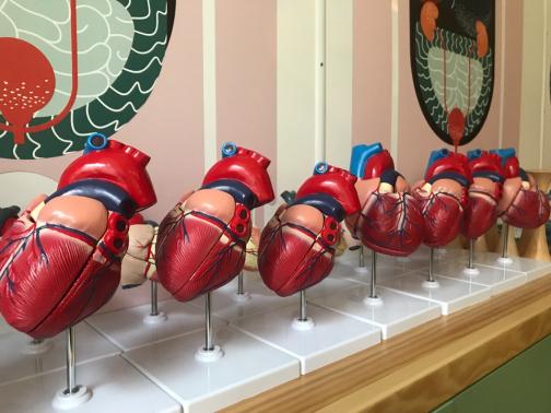 В Петербурге создают Музей здоровья. Пока только для детей