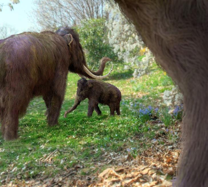 Фото №1 - Названа причина окончательного вымирания мамонтов