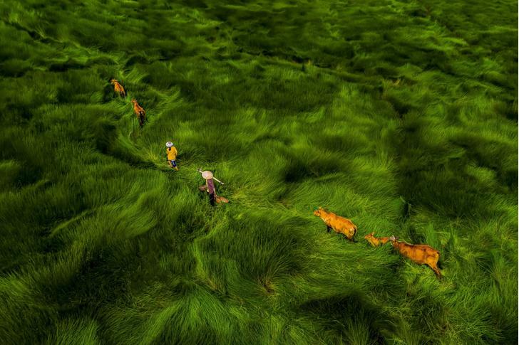Фото №1 - Море травы
