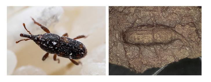 Фото №1 - Археологи обнаружили сосуд, украшенный жуками