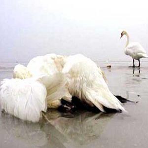 Фото №1 - Индонезия не отдает птичий грипп