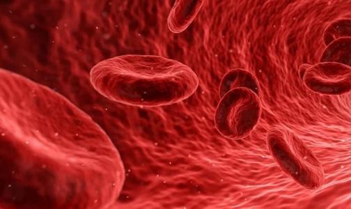 Фото №1 - Глава Института гематологии: Опасность донорства костного мозга для здоровья донора — миф