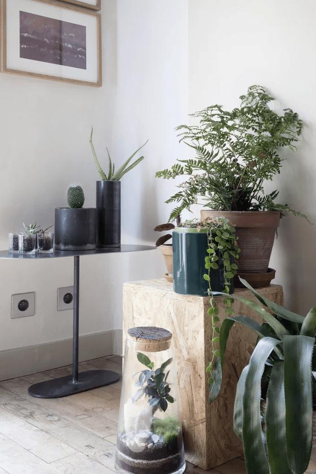 Фото №9 - Растения в интерьере: 7 идей для домашнего сада
