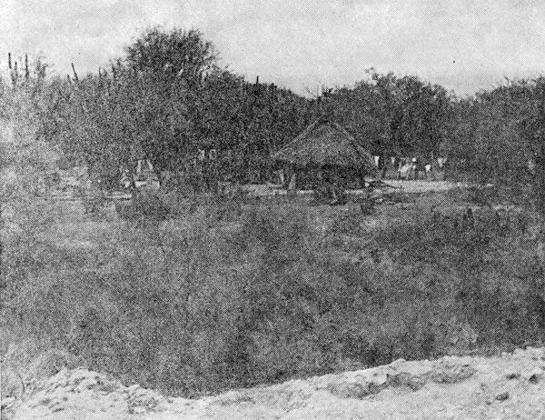 Фото №2 - Масатеки живут в джунглях