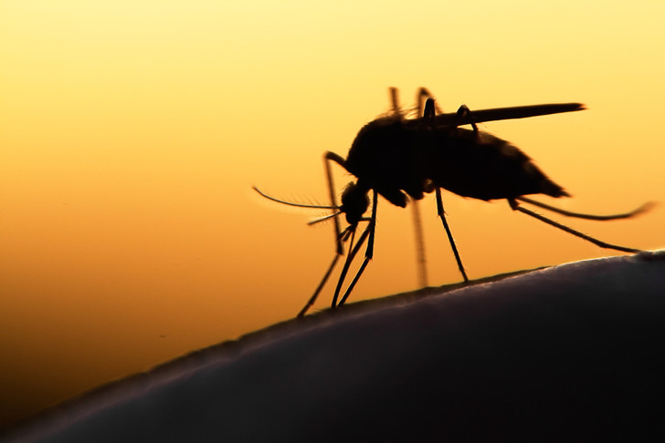Фото №1 - До какого этажа может добраться комар?