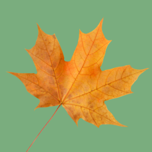 Фото №6 - Тест: Выбери осенний листок и узнай, с чем тебе придется расстаться в сентябре 🍂
