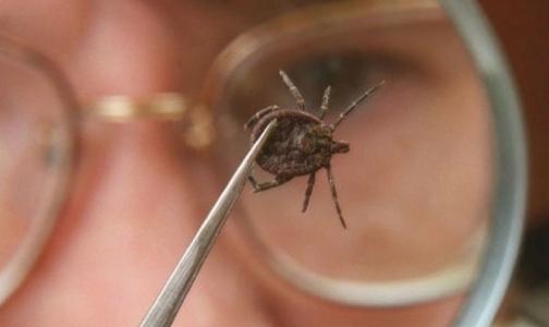 Фото №1 - В Петербурге зарегистрировали первый случай клещевого энцефалита