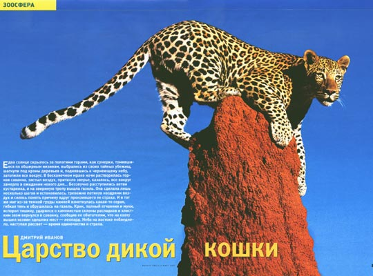 Фото №1 - В царстве дикой кошки