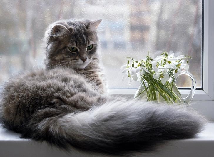 Фото №7 - 9 популярных цветов, которые смертельно опасны для котов