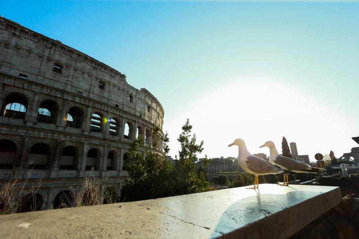 Фото №1 - Виртуальное путешествие: посетите 7 мировых достопримечательностей не выходя из дома