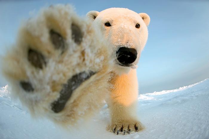 Фото №6 - Таня и медведи: как укротить зверя