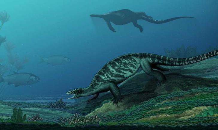 Фото №1 - Как выглядели черепахи в прошлом