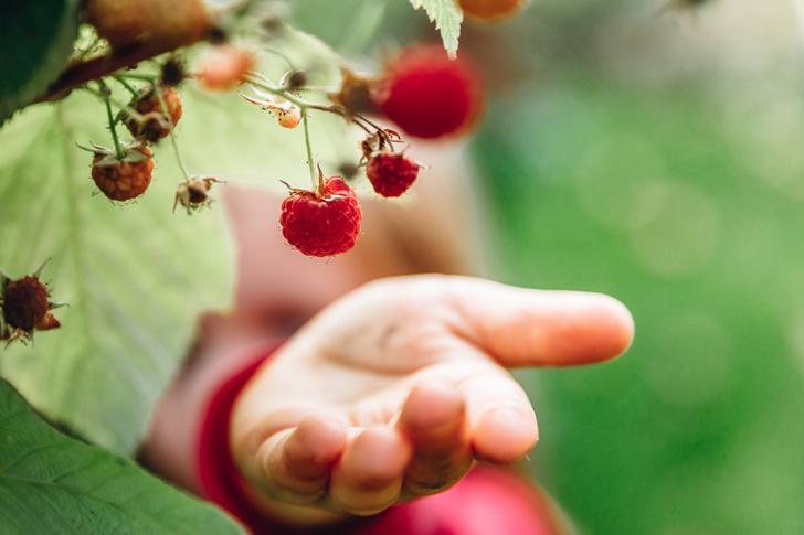 Фото №3 - Для хорошего урожая: 5 вещей, которые нужно сделать в саду в июле