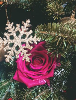 Фото №10 - Елочка, цвети: новый рождественский тренд в декоре