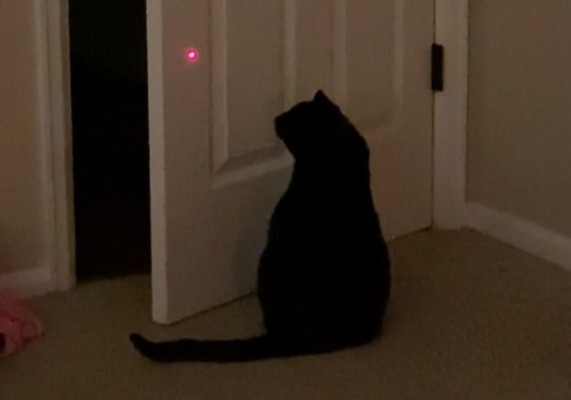 Фото №1 - Лайфхак: как закрыть дверь, не вставая с дивана, с помощью кота и лазерной указки (видео)