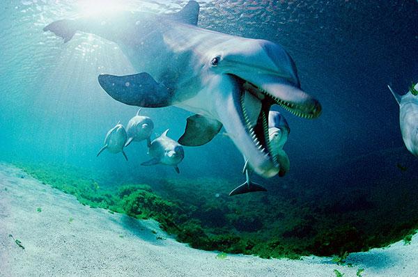 Фото №1 - Люди океана