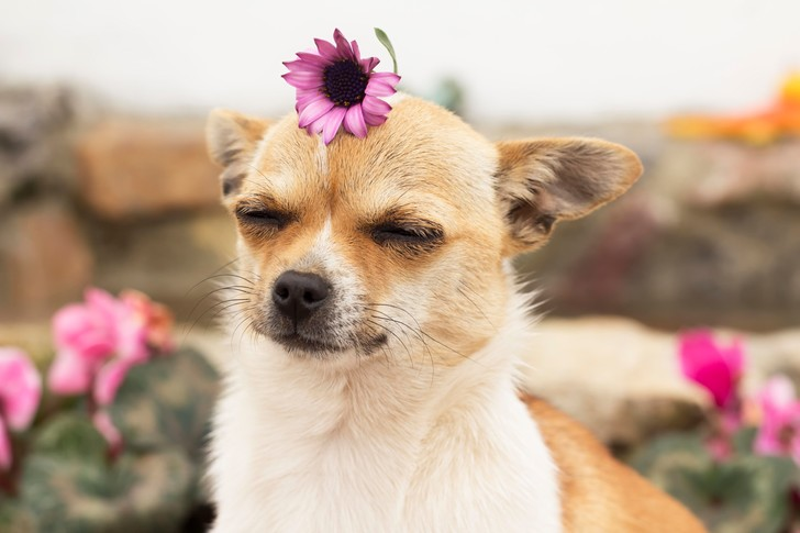 Фото №3 - 7 признаков, что у твоей собаки серьезный стресс, и что можно с этим сделать