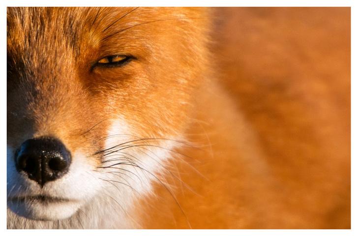 Фото №6 - ВОКРУГ СВЕТА - партнёр фотовыставки «Лесные истории»