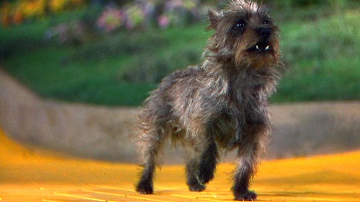 Фото №1 - Quiz: Угадай фильм или сериал по собаке