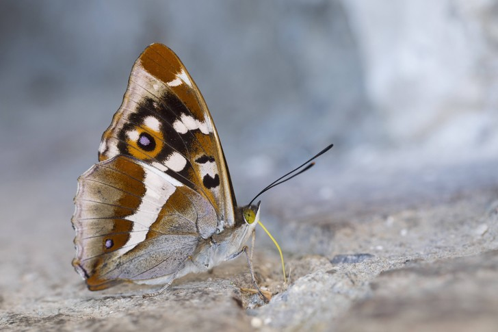 Фото №1 - Численность бабочек в Европе стремительно сокращается
