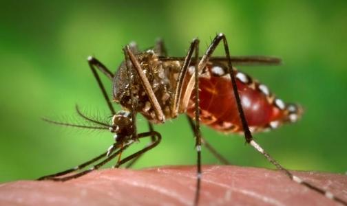 Фото №1 - В Таиланде испытывают первую в мире вакцину от лихорадки денге