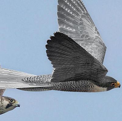 Фото №1 - Железные птицы