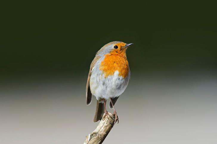 Фото №1 - Как птицы ориентируются в пространстве