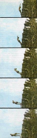 Фото №2 - Сверху вниз и снизу вверх