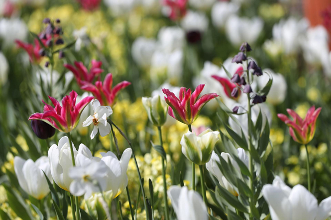 Фото №2 - Сад памяти Дианы: самая вдохновляющая причина попасть в Лондон