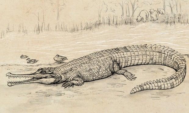 Фото №1 - Ученые изучили останки гигантского крокодила