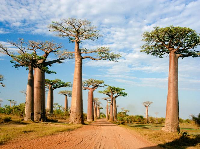 Фото №7 - 5 стран для знакомства с экзотикой (и сколько это стоит)