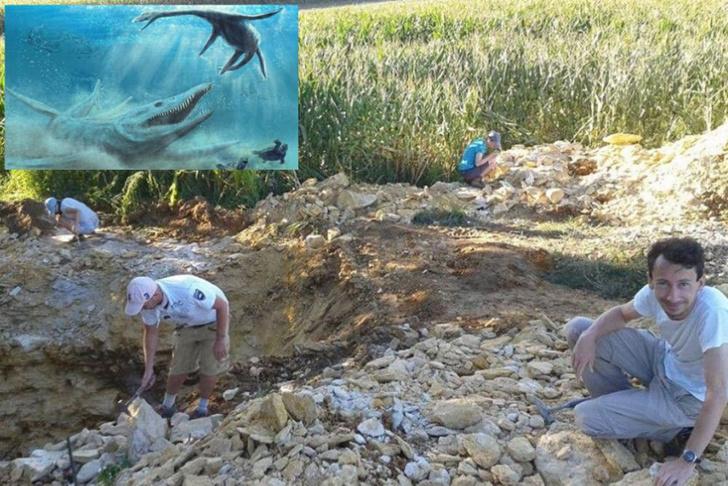 Фото №1 - В Польше впервые нашли останки плиозавра