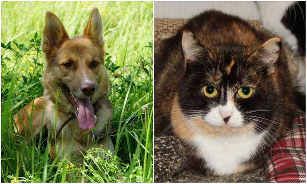 Фото №1 - Котопёс недели: пес Хэппик и кошка Аиша