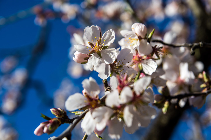 Фото №1 - Весна в Мадриде