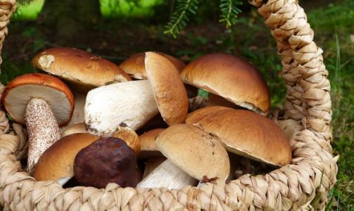 Фото №1 - Эксперты не советуют кормить грибами дошкольников