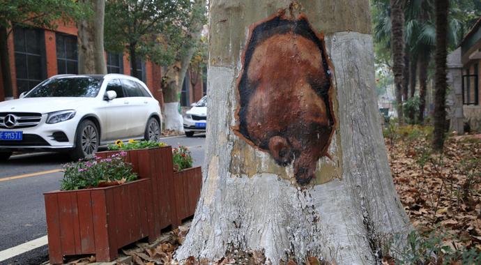 Кто придумал рисовать на деревьях и зачем?