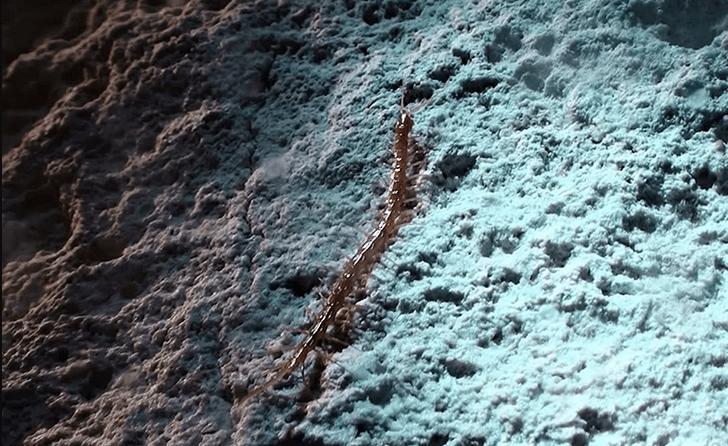 Фото №1 - В Румынии нашли новый вид сколопендры